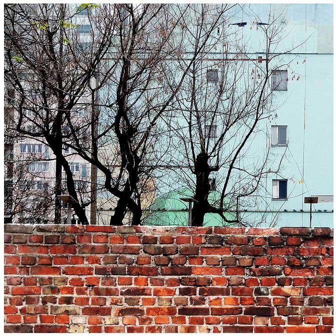 Radonjic_drevesa_za_Web